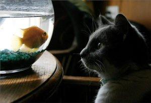 cat_fish